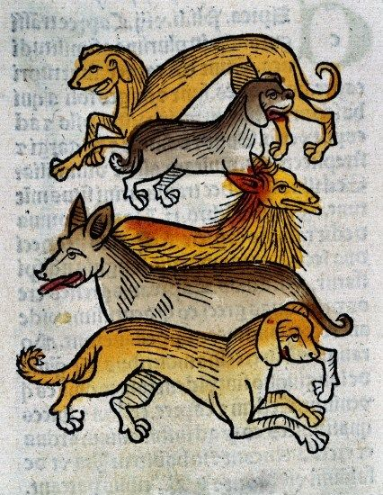 Five different types of dogs by Arnaldus de Villanova, 1491. The Wellcome Library, CC BY