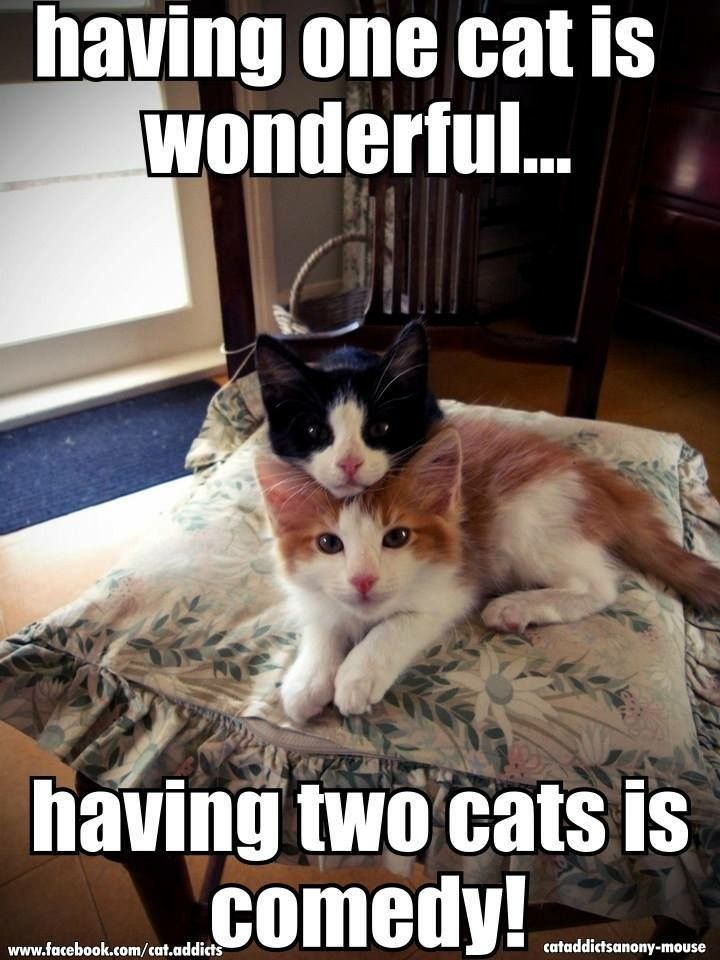 Having three cats is a riot!