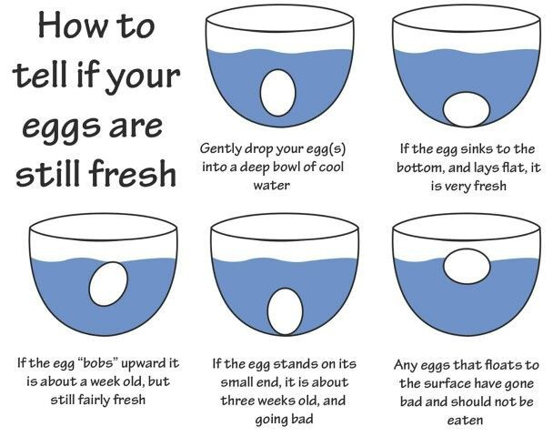 How to tell if eggs are fresh. Good to know!