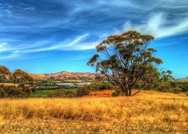 barossa valley, south australia.