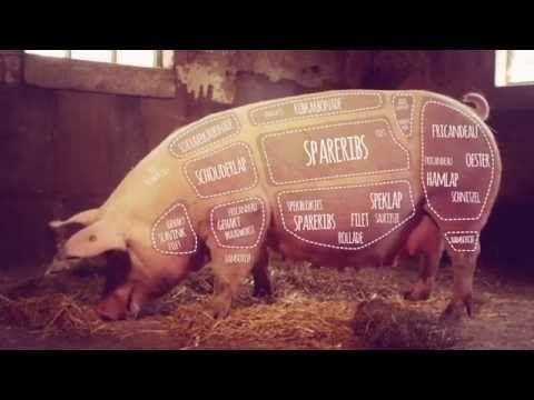 """Filmpje """"Varkens horen bij Nederland"""" van NVV Varken zit echt overal in."""