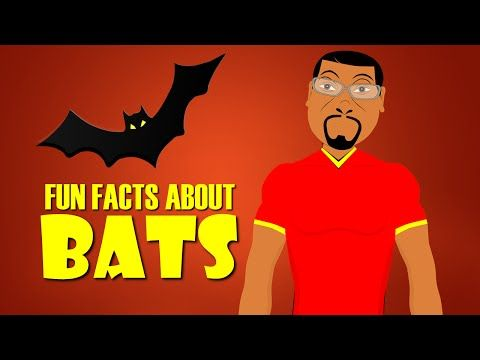 Fun Facts about Bats for Kids! Learn about Bats with this Educational Cartoon (Microchiroptera) www.fresbergcartoon.com