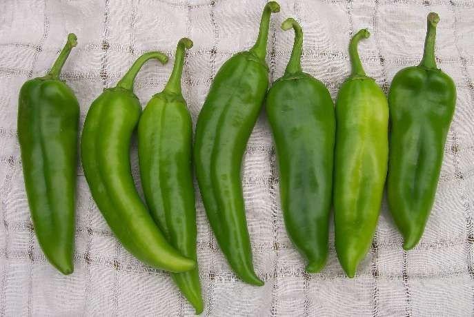 Chile verde vegan cream -  No-crema de chile verde