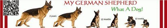 My German Shepherd, My German Shepherd Review, My German Shepherd Scam - http://legitbonusreviews.com/my-german-shepherd-review-by-tim-carter-is-mygermanshepherd-scam/  - Animal Care & Pets, Home & Garden