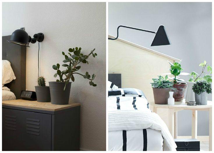 1000 Ideas About Plante D Int Rieur On Pinterest Plantes D 39 Int Rieur Plante D 39 Int Rieur And