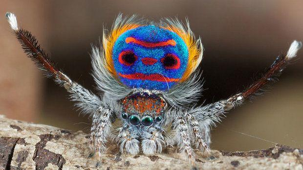 Tajemství pavouků prozkoumáte v sobotu na ZOOMu! |