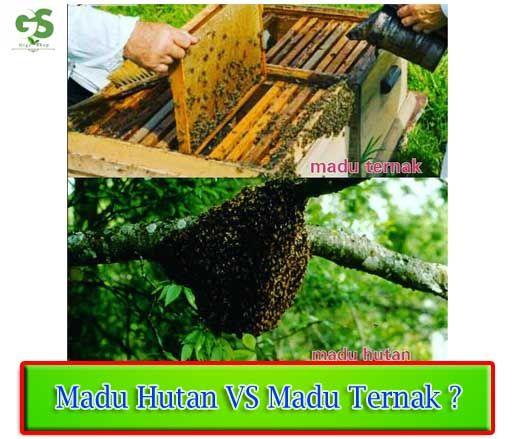 Dalam memahami manfaat madu hutan pertama-tama yang harus dipahami adalah bahwa madu hutan merupakan madu yang benar-benar alami karena diambil langsung dari hutan tanpa proses produksi terlebih dahulu dan campuran zat-zat lainnya. Selain itu madu Read more…