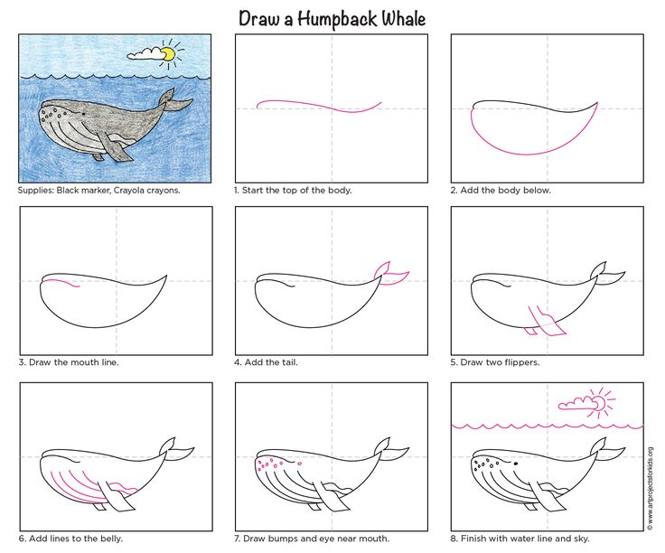 Draw a Humpback Whale. PDF tutorial available for download. #whale #howtodraw #humpback