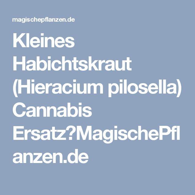 Kleines Habichtskraut (Hieracium pilosella) Cannabis Ersatz?MagischePflanzen.de