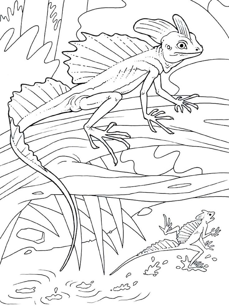Lizard Coloring Pages Picture Animal coloring pages