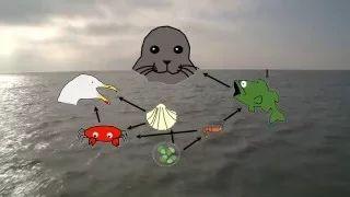Meer leren over wat een voedselketen en een voedselweb is en tegelijkertijd genieten van mooie beelden van zeehonden? Bekijk dit filmpje met leerlingen!