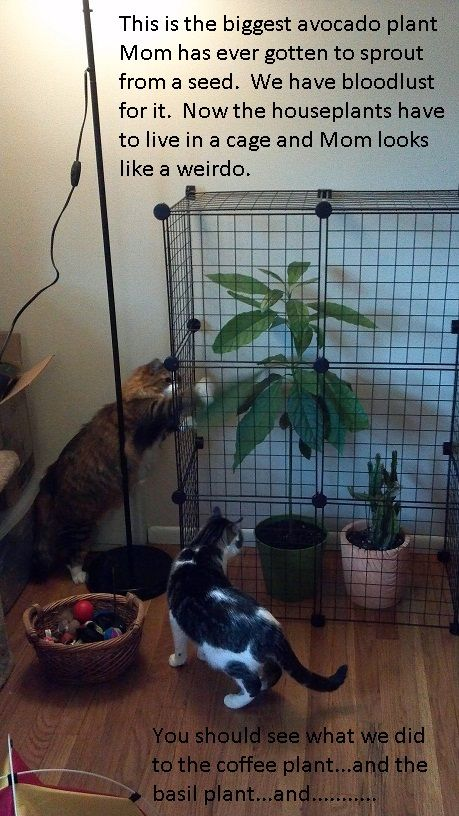 Lol, this is actually a good idea! House plants never survive the wrath of cats at my house.