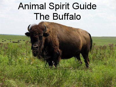 Buffalo Bison Power Animal Symbol Of Abundance