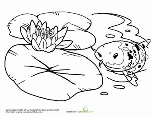 two water lilies. water lily outline. lily pad on the middle of pond ...