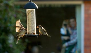 There's still time to register for Big Garden #Birdwatch!