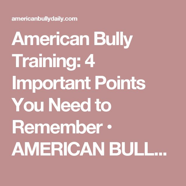 American Bully Training: 4 Important Points You Need to Remember • AMERICAN BULLY DOG BREED INFO CENTER