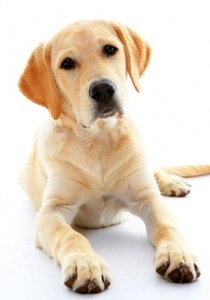 2012's Top Dogs in America