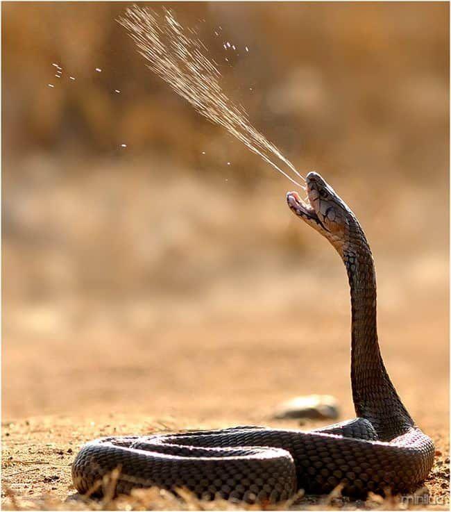 Tipos De Cobras As 10 Cobras Mais Venenosas Do Mundo Check More