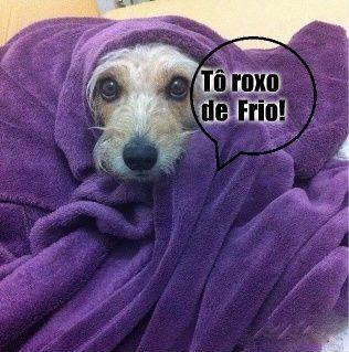 SOLARIS                           : ROXINHO DE FRIO  - Humor