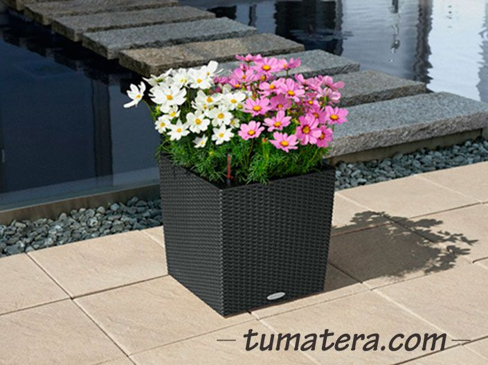 Encuentralas en: http://www.tumatera.co/products/matera-inteligente-10-mi-404044cottage/