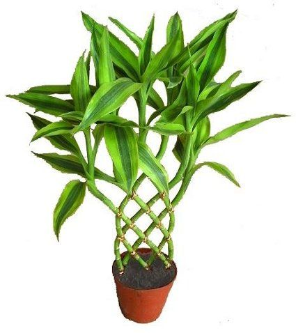 Plantas de interior que no necesitan mucha luz plantas - Luces para plantas de interior ...