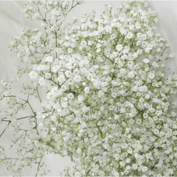 27 Best Images About Oui Pour Le Gypsophile!! On Pinterest