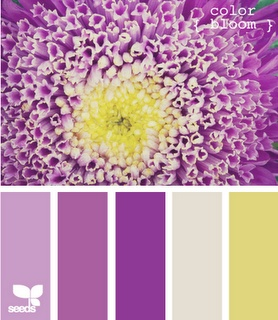 Color bloom passionate purple pinterest - Colors that match with yellow ...