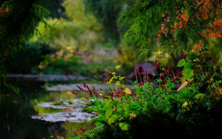 Скачать обои England, пруд, ветки, Hampshire, боке, Гэмпшир, Англия, парк, Romsey, Sir Harold Hillier Gardens, Ромси, раздел природа в разрешении 2048x1155