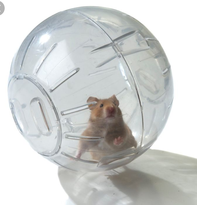 Mrs Piggy And Kermit Hamster Love Your Pet Day Baby Hamster