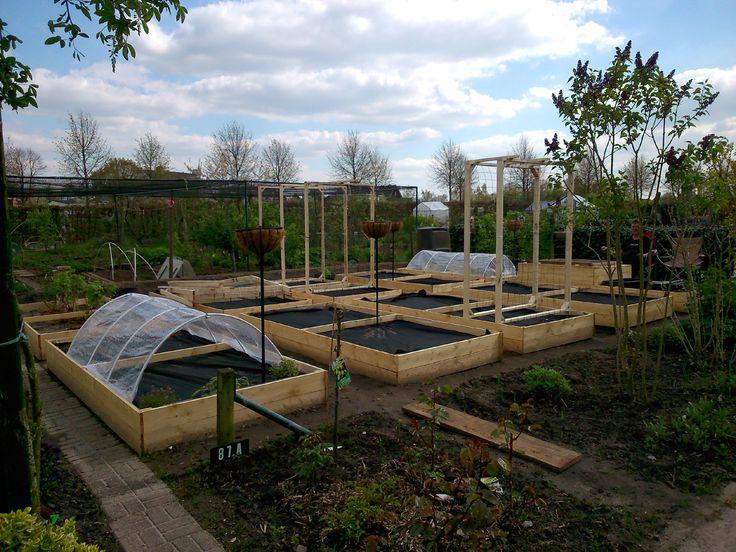 Put up some of the trellises for climbing vegetables today.  Enkele rekken voor klimmende groenten vandaag geplaatst