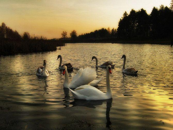 Fotos muy románticas y maravillosas de la naturaleza Bielorrusa de Igor Denisov foto-artista.