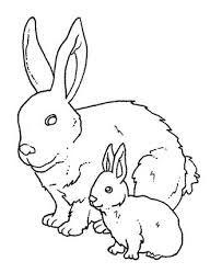 рисунок кролика - Поиск в Google