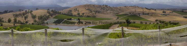 Yarra Glen winery panorama