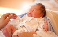 Нейроны и их миграция в мозге новорожденного