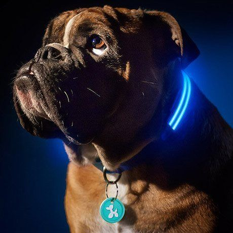 LED Dog Collar - Choose From 4 Sizes And 4 Different Colours from eFizzle