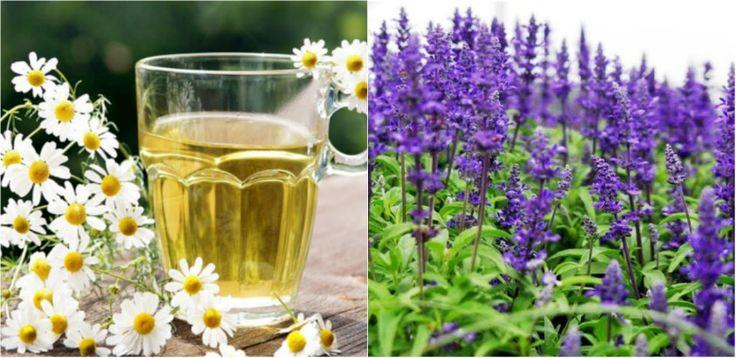 Plante care fac minuni pentru parul tau - Tratamente spectaculoase - http://ideipentrucasa.ro/plante-care-fac-minuni-pentru-parul-tau-tratamente-spectaculoase/