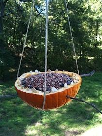 Play Create Explore: Pumpkin Bird Feeder