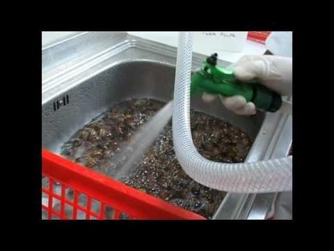 Caracoles Helix Aspersa.mov - YouTube