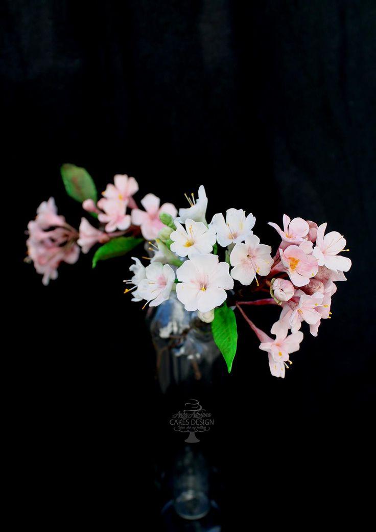 sugar cherry blooms