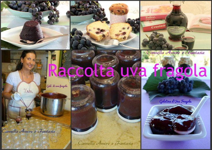 La raccolta di ricette uva fragola è una raccolta dedicata a tutti quelli che…