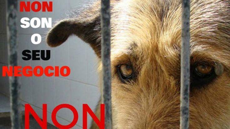 El PP impone en Galicia la ley de bienestar animal que sigue permitiendo las corridas de toros