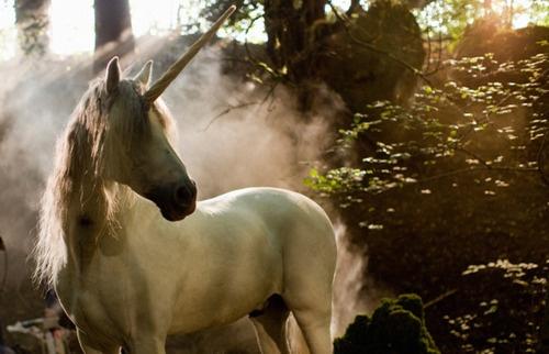 Pin By Lisa Tarr On Unicorns Pinterest Horses