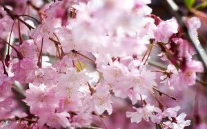 Spring-clean your website! #website #maintenance #blog #business
