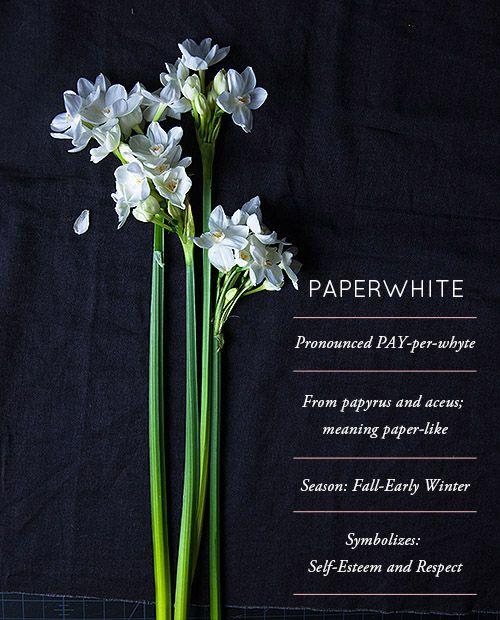 Flower Glossary: Paperwhite - Design*Sponge