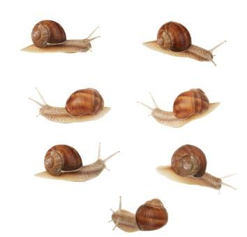"Snail facts for kids (Week 28 Day 3) Reading ""Animals Animals"" (Animal Journal)"