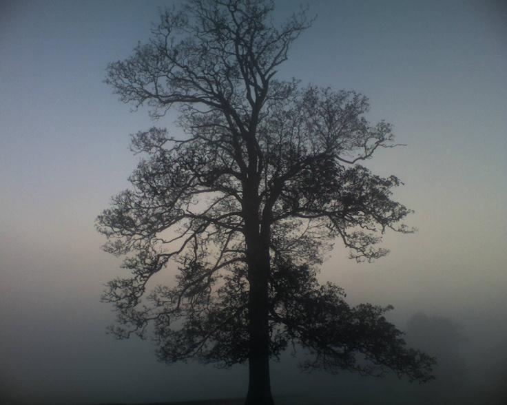 Epic tree - TREE