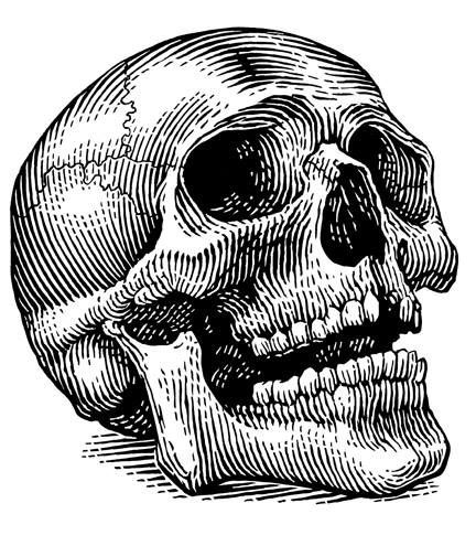 Image result for skull illustration