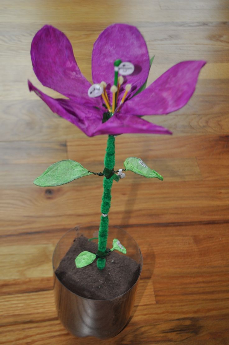 My daughter's creativity. (Here a science project: 3D model of a plant.)