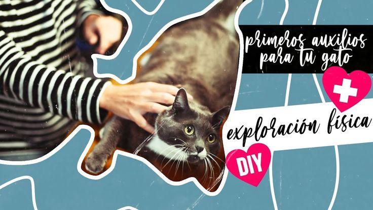 Diy Realiza Primeros Auxilios Para Tu Gato Exploración Fís Animal De Compañia Gatos Primeros Auxilios