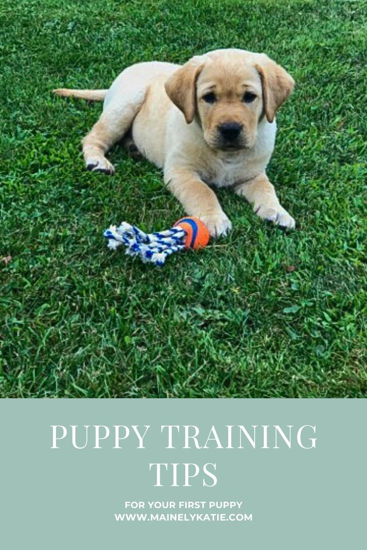Tips For Training Your Puppy To Sit Stay Walk On A Leash Potty